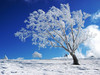 Winter_desktop_wallpapers_and_backgrounds_1